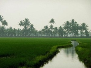 alleppey2